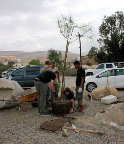 Two palo verde trees were planted.