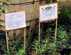 7 Oaks Nursery and The Acorn Cap, both located in Temescal Valley, sell native milkweed.